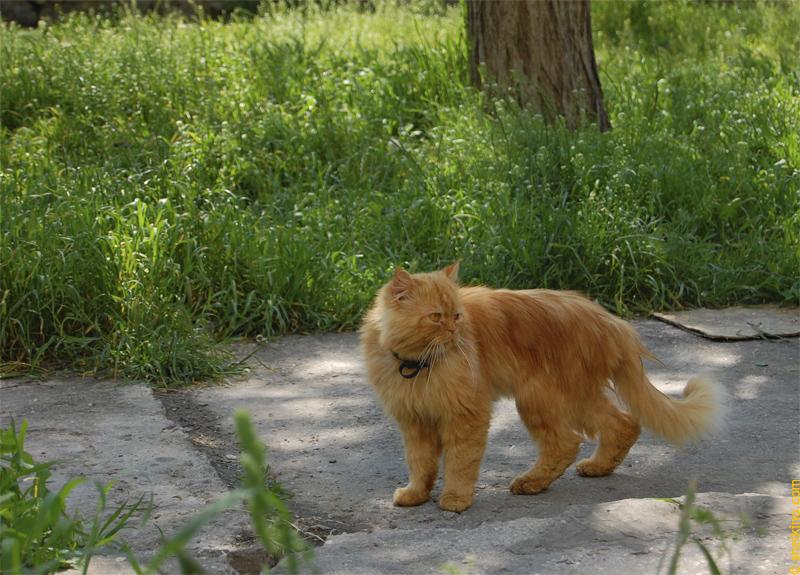 Щелкино, кошки