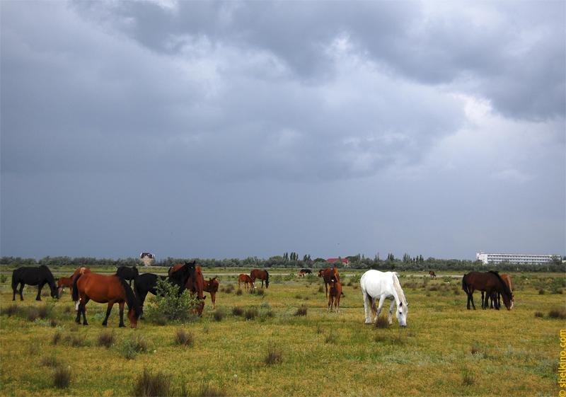 Конные прогулки в Щелкино